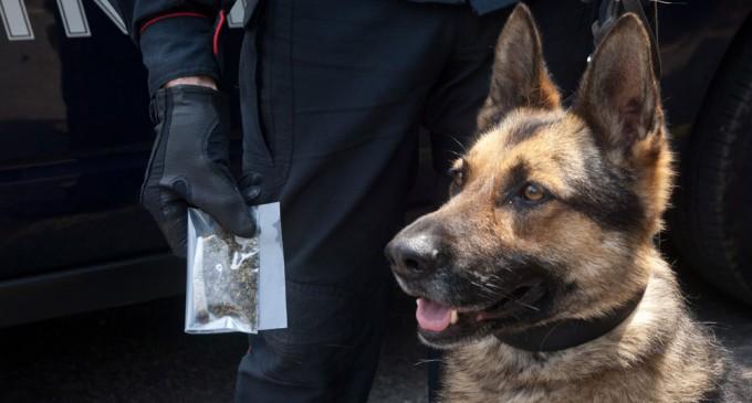 Sesto, polizia e cani antidroga fuori dalle scuole. Recuperati due involucri di hascisc