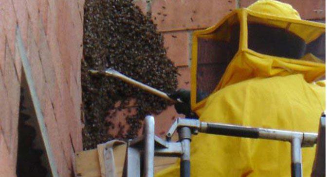Protezione civile Cinisello: 30 interventi in una settimana contro vespe, api e calabroni