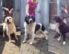 Tre cani ritrovati in strada, l'appello per contattare i proprietari