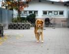 La Lega nazionale per la difesa del cane ospite di Nordmilano24