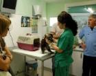 Una clinica gratuita per gli animali, a due passi dal Nordmilano