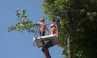 Cormano, taglio del verde nei parchi cittadini