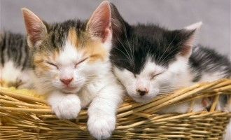 Paderno, tre gattini abbandonati tra i rifiuti del mercato