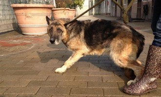 A scuola di bon ton per cani con la protezione civile