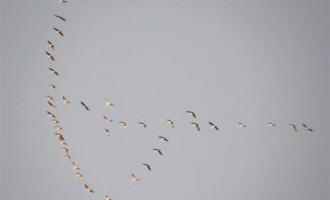 Parte un corso di Bird Watching al Parco Nord Milano