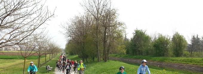 Nuovi alberi al Grugnotorto: 115 pioppi e querce a Cinisello