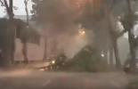 Temporale sul Nordmilano, cade un albero in strada a Cinisello (video)