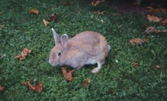Tre conigli morti e decapitati in strada. Orrore a Sesto