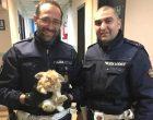 Gli agenti della polizia locale recuperano un coniglio per le vie di Sesto