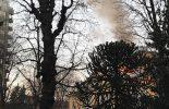 Incendio a Villa Zorn: polemica per i botti vietati, ma usati dal Comune (video)