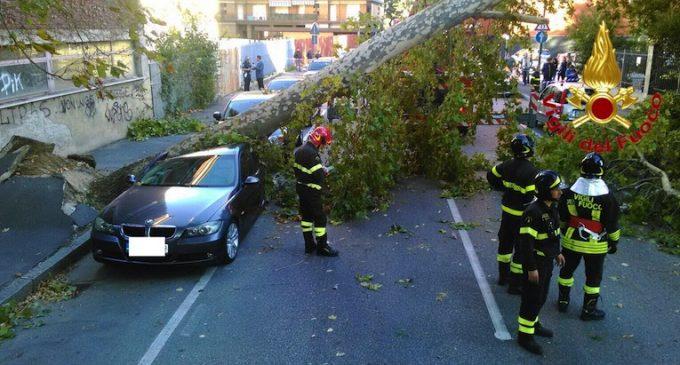 Sesto, il vento abbatte un albero su un'auto. Tragedia sfiorata