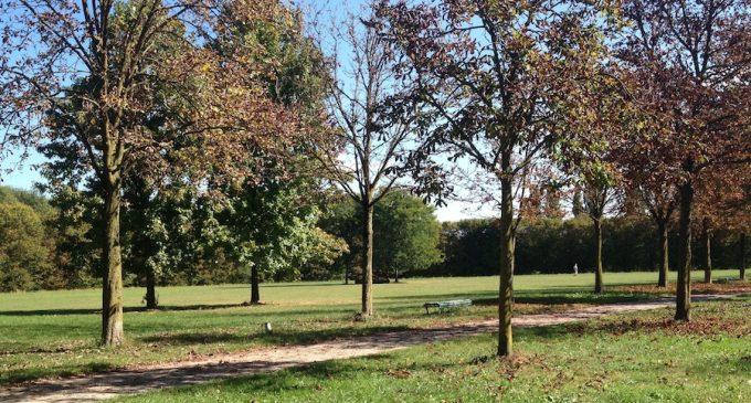 Decine di alberi abbattuti al Parco Nord: ecco il motivo
