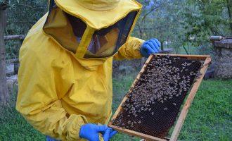 Parco Nord: aperte le iscrizioni al nuovo corso di apicoltura urbana