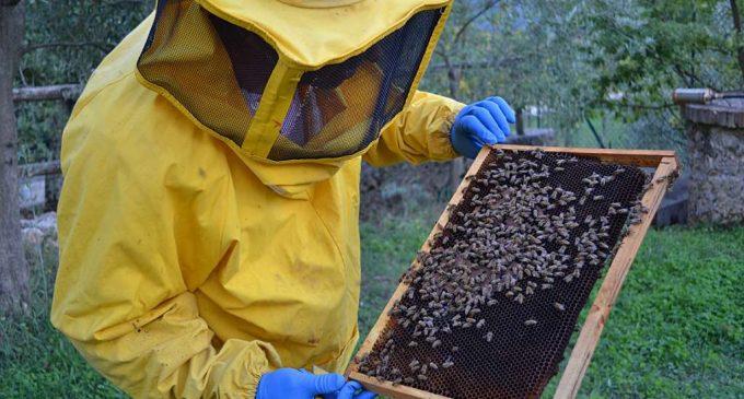 Parco Nord, in Cascina Centro Parco un corso di apicoltura urbana