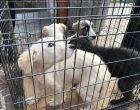 Cusano, 4 cuccioli abbandonati in una gabbia. Ora sono pronti per l'adozione