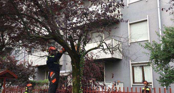 Temporali, a Cinisello allagamenti e alberi abbattuti