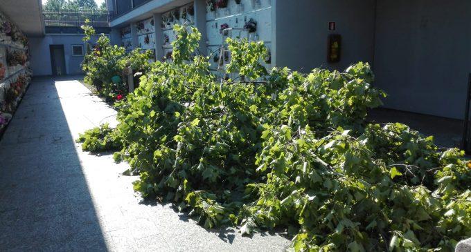 Sesto, crollano le piante nel Cimitero Nuovo