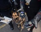 Controlli nelle scuole: la prevenzione si fa coi cani antidroga