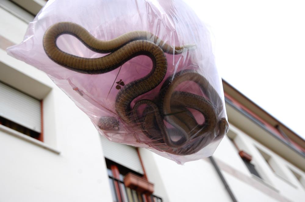 serpenti cinisello