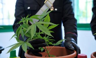 Una serra di marijuana nel sottotetto