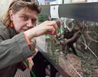 Vandalizzata la serra Mylius: distrutti gli acquari, morti i pesci