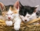 Venti gatti da adottare: l'appello del Comune di Sesto