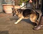 Cani avvelenati: i consigli della veterinaria