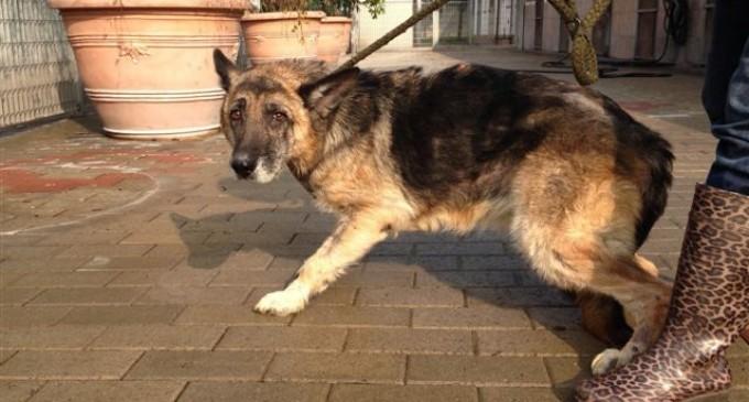 Regione Lombardia: sì alla tumulazione degli animali con il padrone