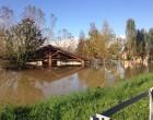 I gatti alluvionati di Milano trovano rifugio a Palazzolo