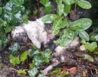 Strage di gatti agli orti comunali di Cusano
