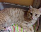 Appello di una sestese: aiutatemi a trovare il gatto Mishka