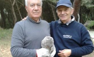 Gev in trasferta a Bibbona (Toscana) salvano un allocco
