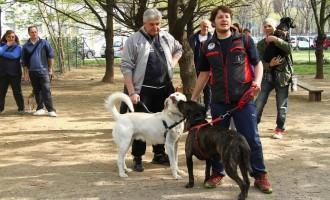 Quattro Zampe Cinisello, partito il corso di addestramento cani