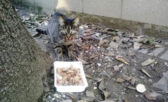 Violenze sugli animali: attaccata una colonia felina