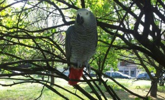 Aiutiamo questa persona a ritrovare il suo pappagallino Bruno