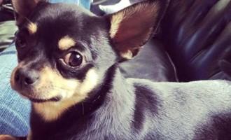 Cinisello Balsamo: vuoi adottare un animale a quattro zampe? Il sito del Comune ospita la bacheca con le disponibilità del canile