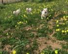 L'Associazione Zampettando sarà all'Happy Animal di Sesto San Giovanni