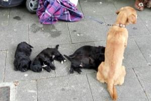 mendicante cani malnutriti sesto 1