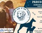 """Sesto: domenica c'è """"Parco a 4 zampe"""", festa dedicata agli animali"""