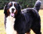 Anziano di Bresso morì per un cane non custodito. Condannati i proprietari