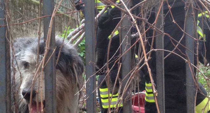 Sesto, cane tra i binari della ferrovia. I vigili del fuoco lo mettono in salvo