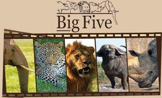 """Cinisello, ecco il progetto """"Adotta un Ranger"""": una serata per conoscere i """"Big Five"""""""