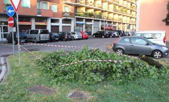 Maltempo a Cinisello Balsamo, due alberi caduti e auto danneggiata