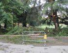 Cinisello Balsamo, il maltempo abbatte gli alberi. Ferito un uomo