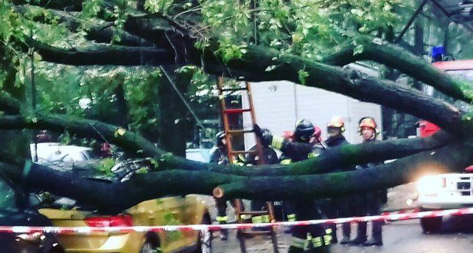Cinisello Balsamo, albero caduto in via Papa Giovanni XXIII