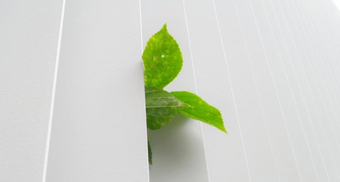 Imprese: la green economy può aiutare contro la crisi